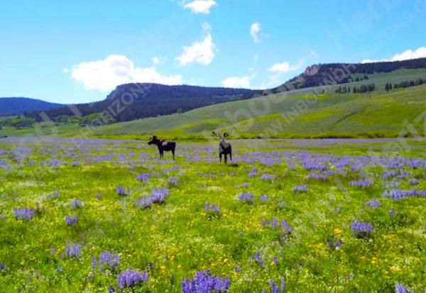 Wyoming-4K-014-TwoMoose